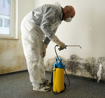 mold removal guide